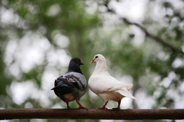 Newborn Pigeon Care | Animals - mom me