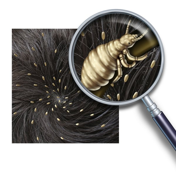 Both human and canine lice eggs are called nits.