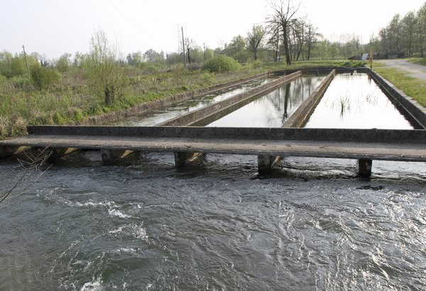 Large raceway for trout fish farming