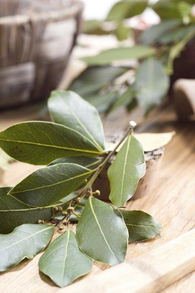 Ramillete de hojas de laurel.