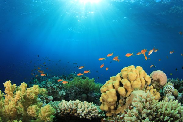 Saltwater ecosystems range from the abundant life of coastal areas to the ocean bottom.