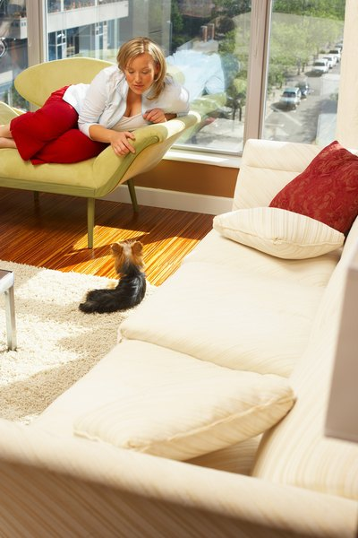 Male dogs make fine indoor companions, as long as they don't mark their territory in your home.