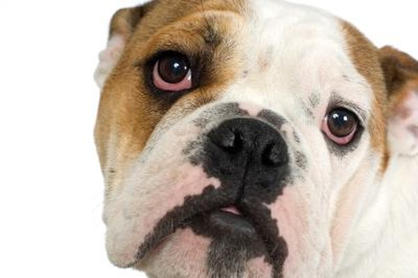 Can Food Allergies Cause Red Eyes In Dogs