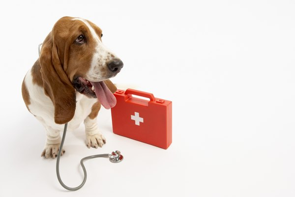 A dry cough, swollen belly, diarrhea, vomiting and listlessness can point to worms in dogs.