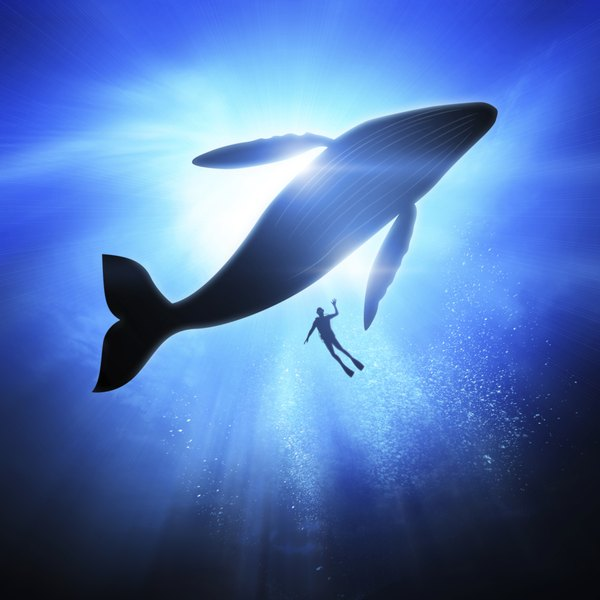 Humpback whale and diver underwater