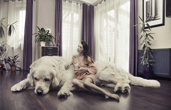 De acordo com a Federação Internacional de Cinologia, existem cerca de 350 raças de cachorro em todo o mundo