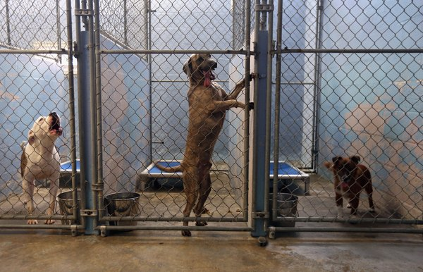 Leaving yourself time will help prevent you from having to surrender your dog to a kill shelter.