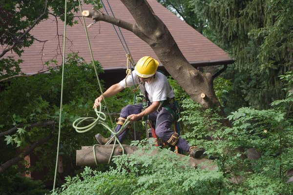 What Is The Average Cost Of Removing A Large Tree