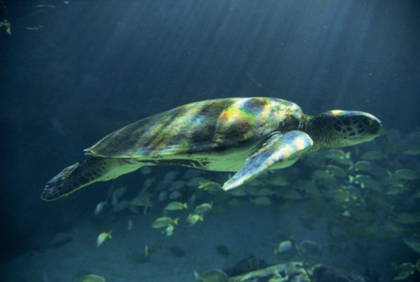 What Eats Seagrass?