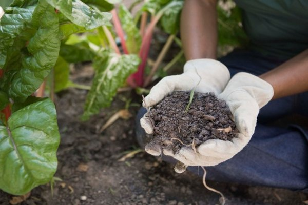 Floods leave nutrient-rich soil behind.