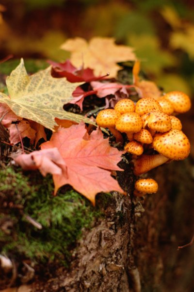 Fungi, one of the biotic factors, are among the decomposers of a forest ecosystem.
