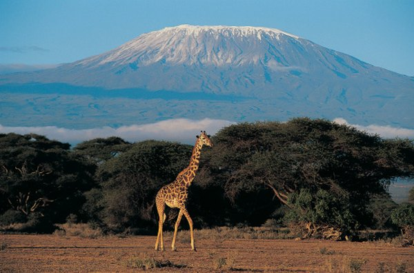 Mount Kilimanjaro is a massive volcano in East Africa that supports glaciers and icefields.