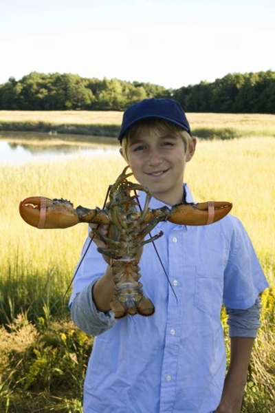 Lobsters are marine crustaceans.