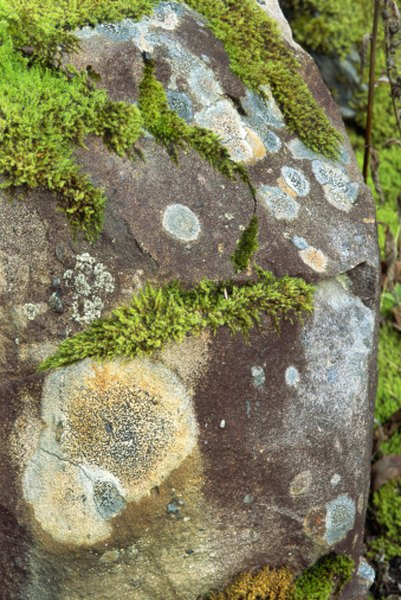 Lichen on rocks above tree line