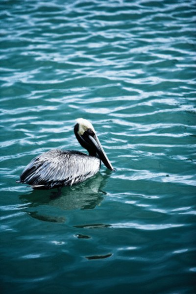 Sea birds rely on the tides to hunt for fish.