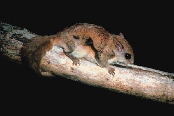 Flying squirrels inhabit all of Ohio.