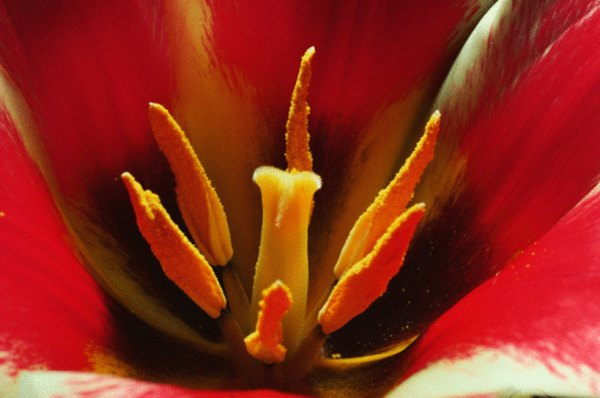 The stigma can be seen in the center of this flower.