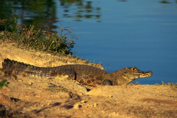 The Pantanal is a massive, wildlife-rich freshwater wetland in Brazil, Bolivia and Paraguay.