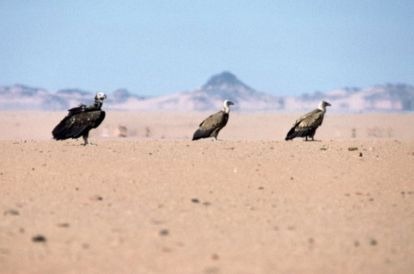 Parched, level basins and flats are characteristic of many deserts.