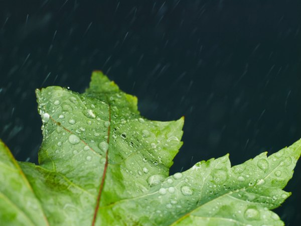 Water, such as rain, is one of the abiotic factors of a forest ecosystem.