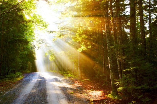 Light is the chief form of energy in a forest ecosystem, making it one of the key abiotic factors.