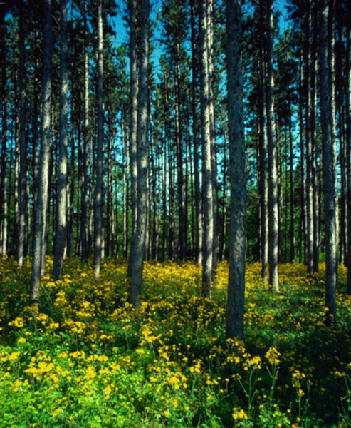In spring, wildflowers fill the ground layer of the deciduous woods.