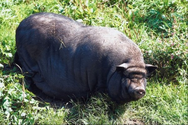 A List of States That Have Feral Hogs   Animals - mom me