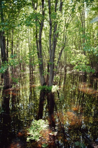 A tract of swamp tends to support impressive biodiversity.