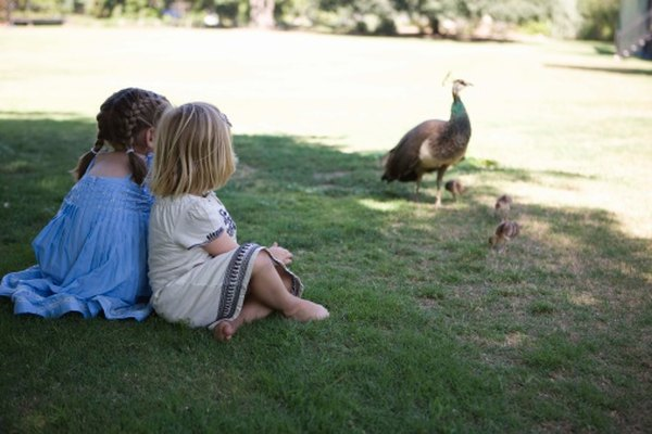 Peacock advocates say they enjoy being around people.