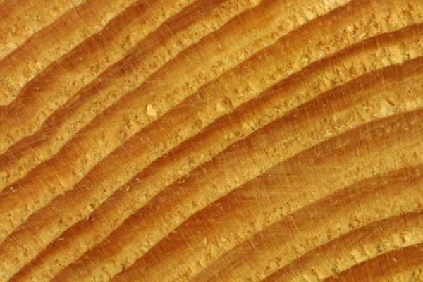 Trees form new xylem each year, and the old xylem creates tree rings.