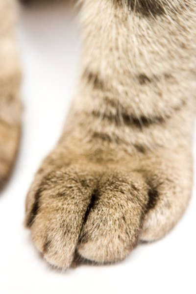 A cat's retractable claws will almost never show up in paw prints or tracks.