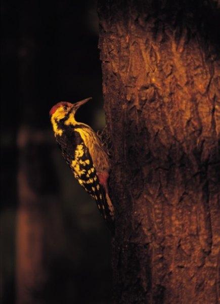 Woodpeckers have been seen using hummingbird feeders.