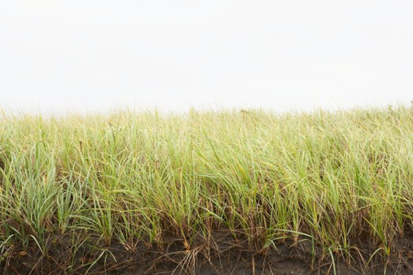 Protecting a prairie may mean active maintenance with prescribed burns and invasive-plant removal.