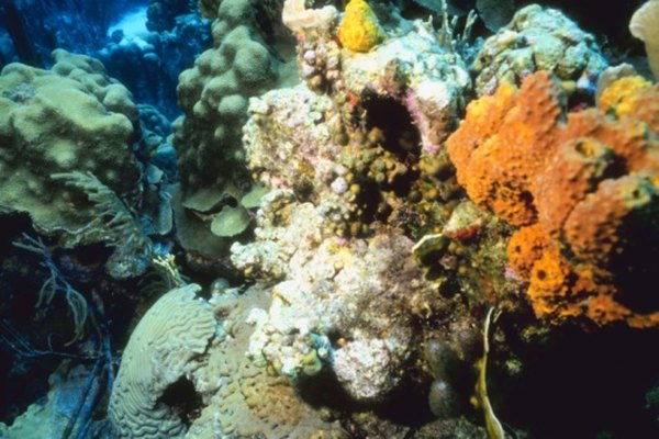 Coral reefs are vibrant habitats for many species.