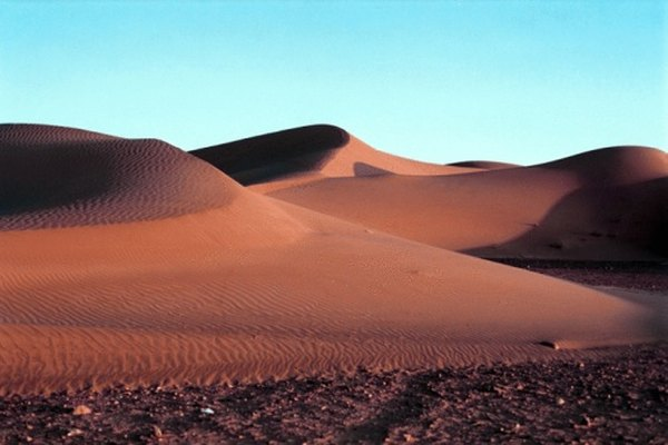 Reptiles, amphibians and mammals live in the Sahara desert.