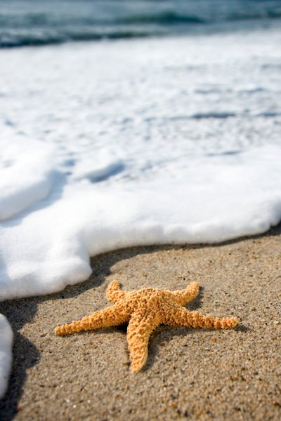 Starfish are among the tide pool inhabitants suited to life in or out of the water.
