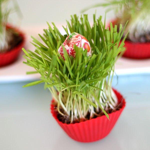 Estes cupcakes de grama são adoráveis
