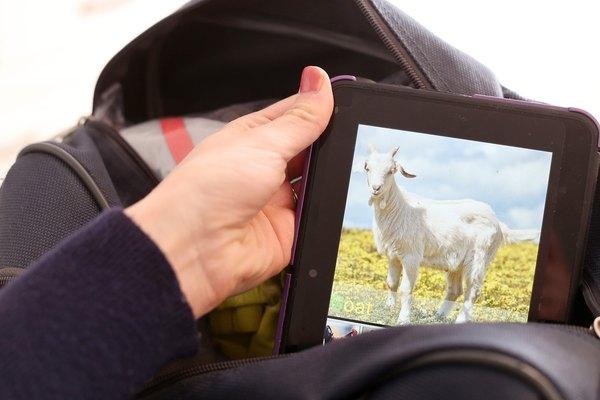 Tablets e celulares podem ser ótimas distrações
