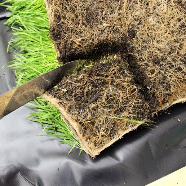 Corte os pedaços de grama pela raiz