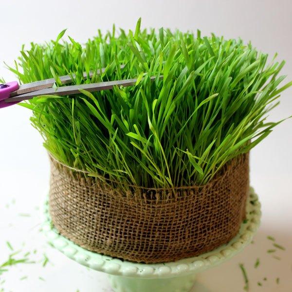 Corte a grama para deixar as laterais e o topo mais uniformes