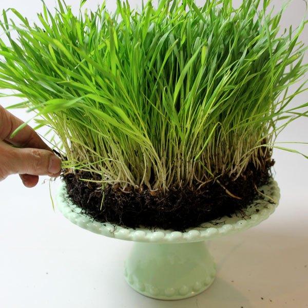 Coloque um pedaço de grama sobre uma bandeja de bolo