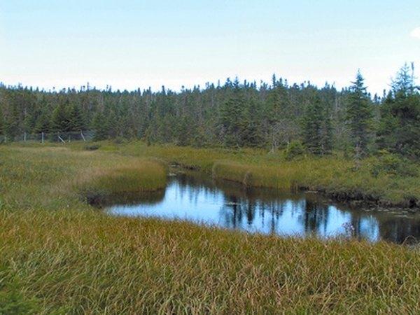 Plant life around wetlands help to filter pollutants.
