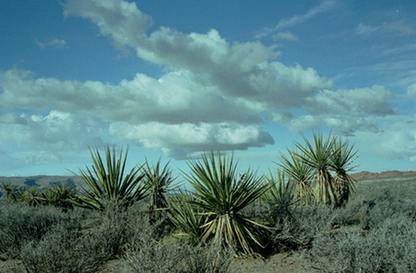 Annual rainfall ranging from 16 to 30 inches per year encourages the growth of drought-tolerant vegetation.