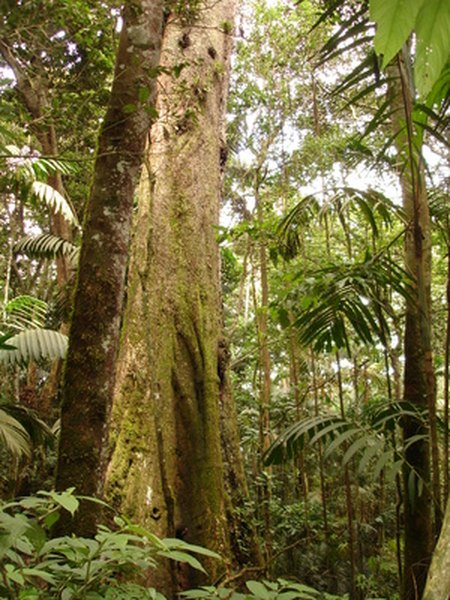 Tropical rainforests are rich in plant and animal life.