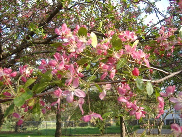 Flowering trees beautify property.