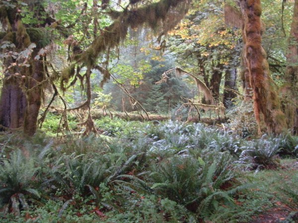 Rain forests grow in thick layers, shading undergrowth plants.