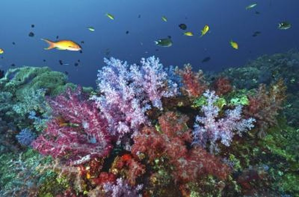 the fish populations of coral reefs can be adversely effected by tsunamis