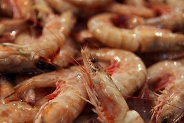Purchase juvenile shrimp from a hatchery