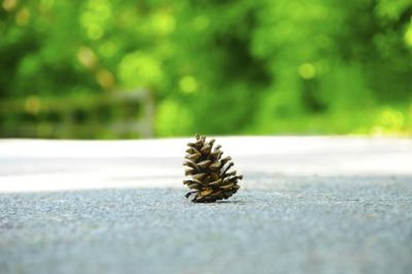 pine cone in middle of road