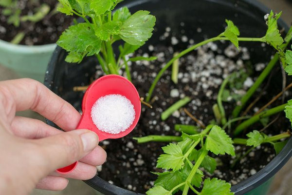 How To Add Epsom Salt Amp Coffee Grounds To Potting Soil